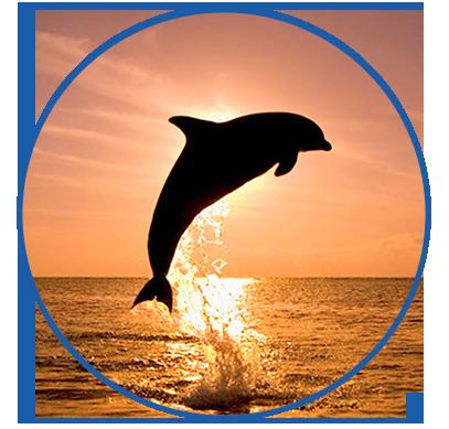 Avistamiento de delfines en la Costa del Sol