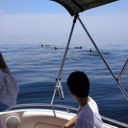 ver-delfines-paseo-barco-malaga-2